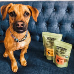 cute-tan-puppy-with-vegan-Camberville-dog-treats